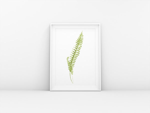 Fern Illustration Original