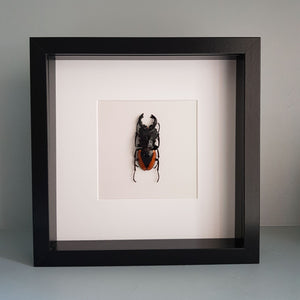Beetle Entomology