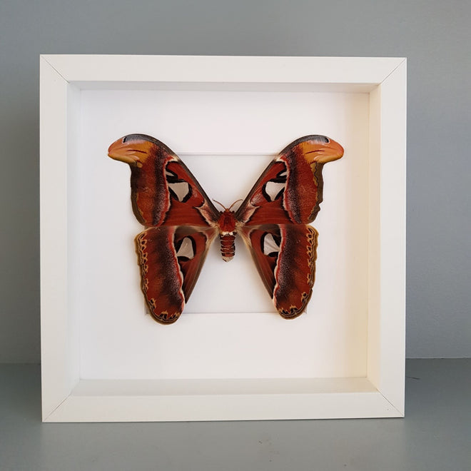 Moth Entomology