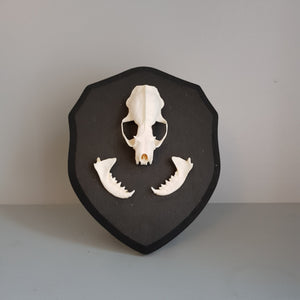 gemmas-curiosity-shop - Mink skull on shield - Gemma's Curiosity Shop - Oddity
