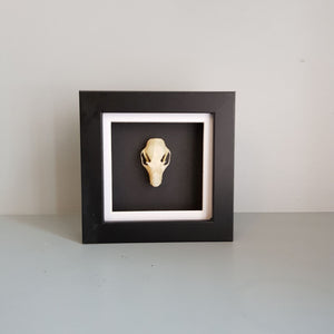 gemmas-curiosity-shop - Fruit bat skull - Gemma's Curiosity Shop - Oddity