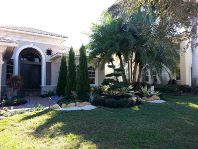 Brought This Dull Front Yard Landscape In Boca Raton Back To Life!