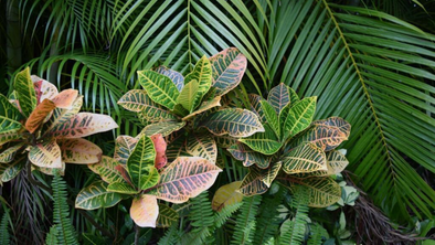 South Florida Plant Guide: The Best Low Maintenance Plants For Your Landscape Design