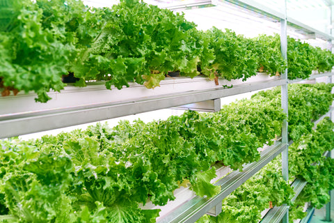 Shipping Container Farms for Indoor Container Farming & Gardening | Container One