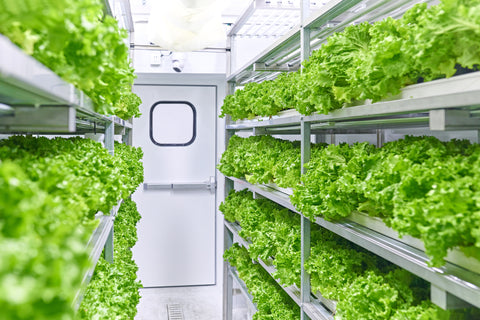 Shipping container used for indoor farming and greenhouse spaces.