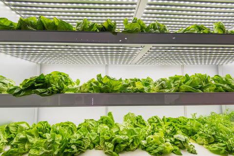 Shipping Container Farms are the future of sustainable agriculture.