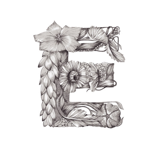 Free logo botanical typography illustration by Melbourne based illustrator Kelly Thompson