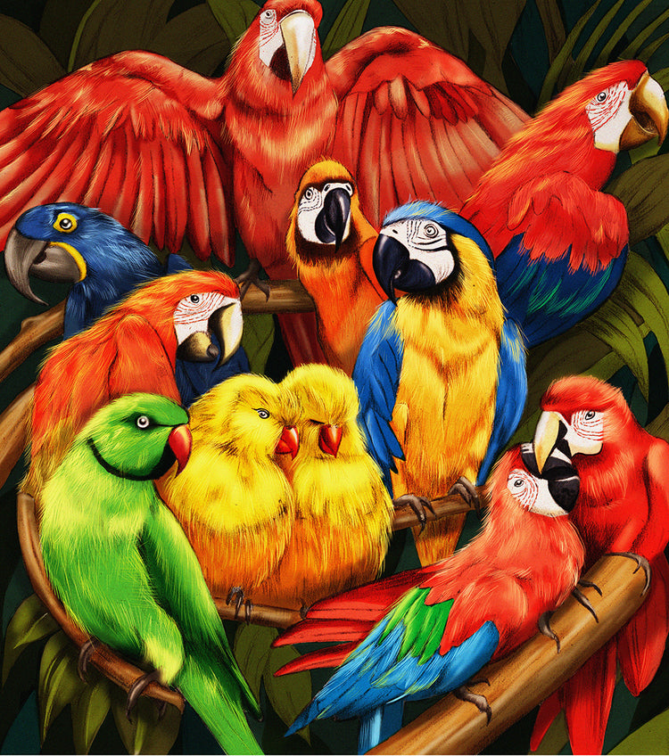 Parrots nature illustration by Melbourne based illustrator Kelly Thompson