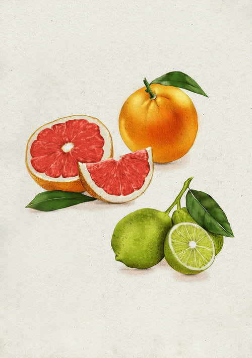 Vitamin C Doctor Studio health beauty citrus fruit illustration by Melbourne based illustrator Kelly Thompson