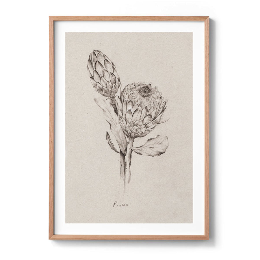 Kelly Thompson botanical illustrator in Melbourne, floral illustration commission