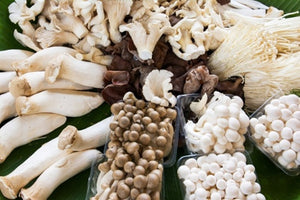Mushrooms for Immunity and Health
