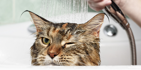 Tabitha Eve Sustainable Pet Owner Cat in the bath with shower
