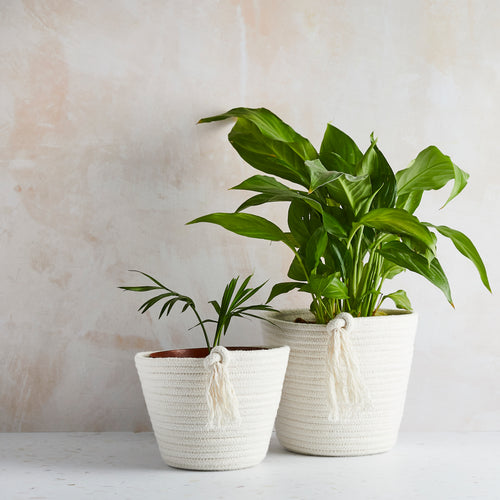 Cotton ECO-TWIST Plant Pots