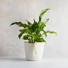 Load image into Gallery viewer, Cotton ECO-TWIST Plant Pots