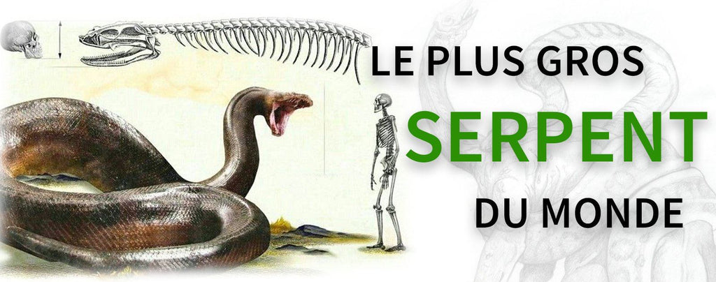 Le Plus Gros Serpent du Monde