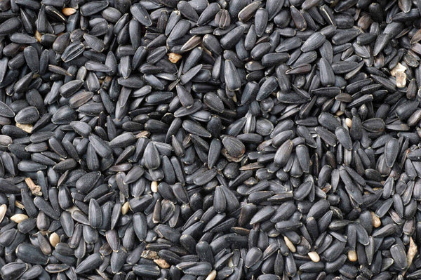 Gablestock Black Sunflower Seeds 13kg
