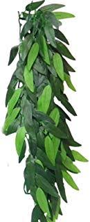 Jungle Plant Ruscus M