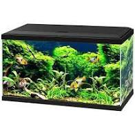 Ciano Aqua 60 LED Aquarium Black Tanks CIANO