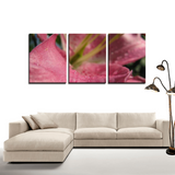 Pink Beauty- Canvas Set - Streetside Apparel