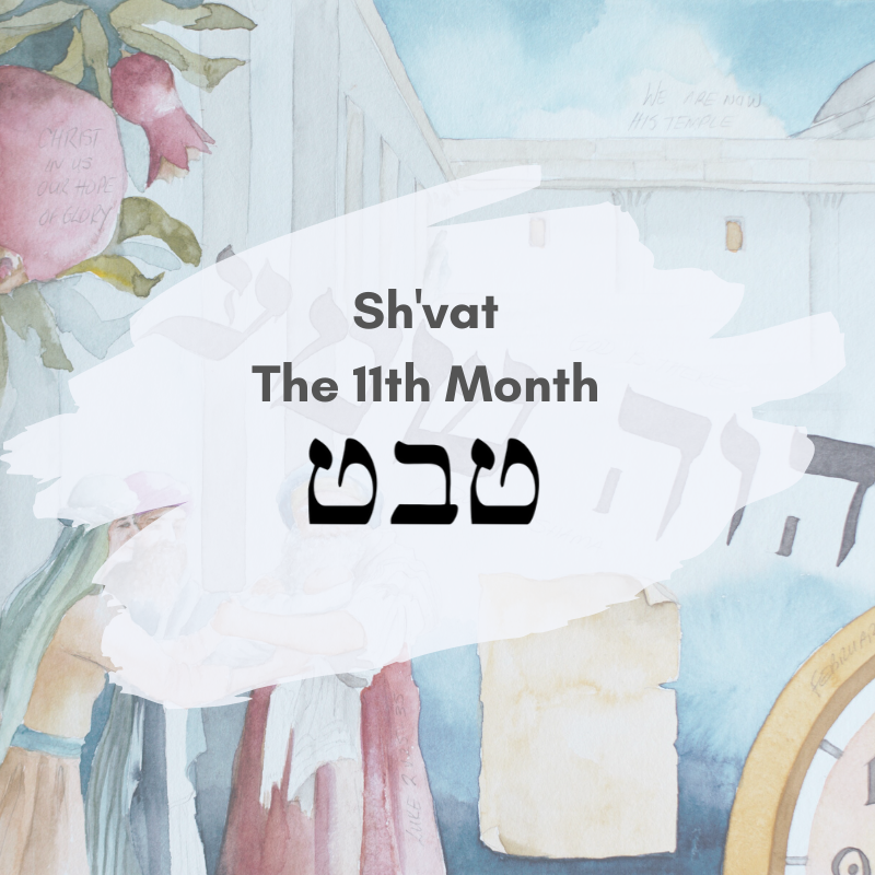The 11th Month - the Month of Sh'vat