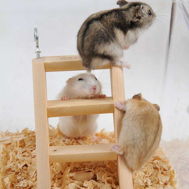 Hamster toy Wooden Ladder Climbing, Random Color Delivery, Size: 15*7*2cm - fommystore