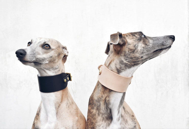 Classic Leather Collar (Hound)
