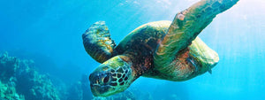 Targhee/silk/ bamboo (80/10/10) - Sea Turtle - 5.1 oz.