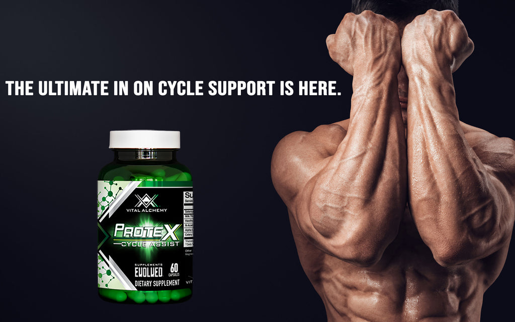 liver support,  milk thistle,  PCT,  cycle assist,  Liver Protection,  Vital Labs, CEL, Prohormone Support,  Cycle Support, Protex, vital alchemy