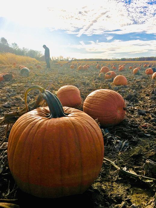 The Best Pumpkin Patches Near Ottawa