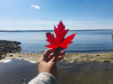 Maple Leaf, Ottawa River, Britannia Beach