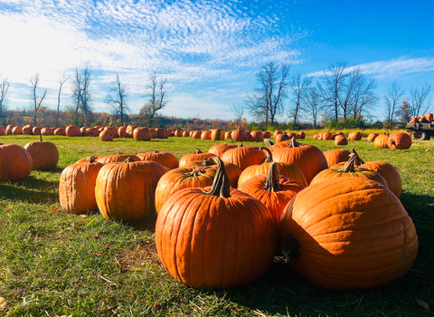 Millers Farm and Market Manotick Pumpkins, Ottawa Pumpkin Patches
