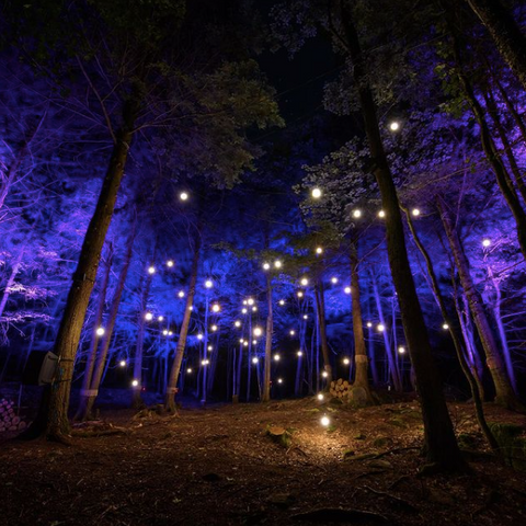 The best things to do when visiting Ottawa, Omega by Night at Parc Omega, explore Montebello near Ottawa, what to do during summer in Ottawa, from summer into fall Ottawa events, what to do in Ottawa, Ottawa's best, enchanted forest with animals at night