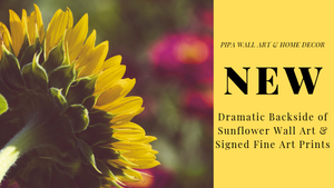 New - Floral Nature Photography - Dramatic Backside of Sunflower Wall Art & Fine Art Prints