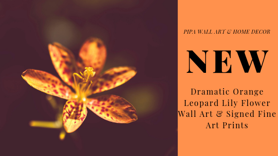 New - Floral Nature Photography - Dramatic Orange Leopard Lily Flower Wall Art & Fine Art Prints