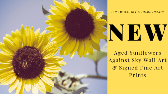 New - Floral Nature Photography - Aged Sunflowers Against Sky Wall Art & Fine Art Prints