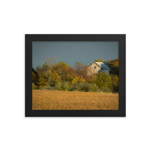 Abandoned Barn In The Trees Framed Photo Paper Wall Art Prints