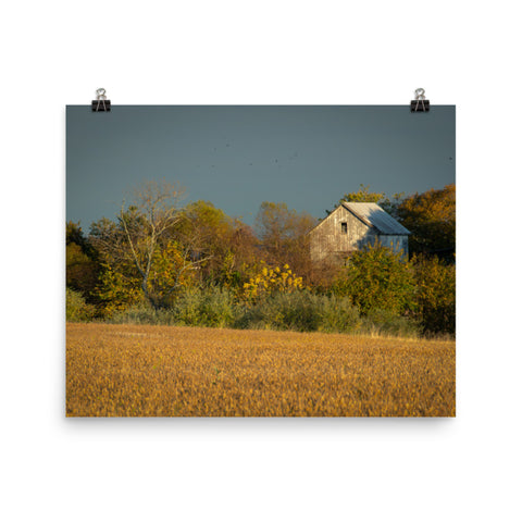 Abandoned Barn In The Trees Landscape Photo Loose Wall Art Prints