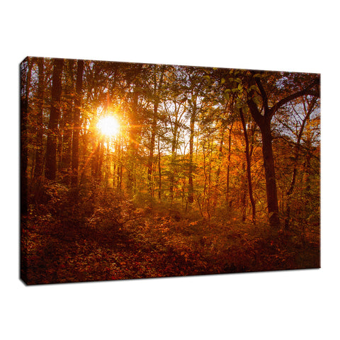 Autumn Sunset in the Trees Landscape Photo Fine Art Canvas Wall Art Prints