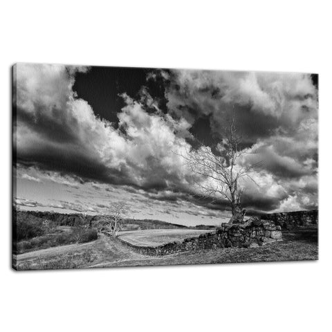 Dead Tree and Stone Wall in Black and White Rural Landscape Fine Art Canvas Wall Art Prints