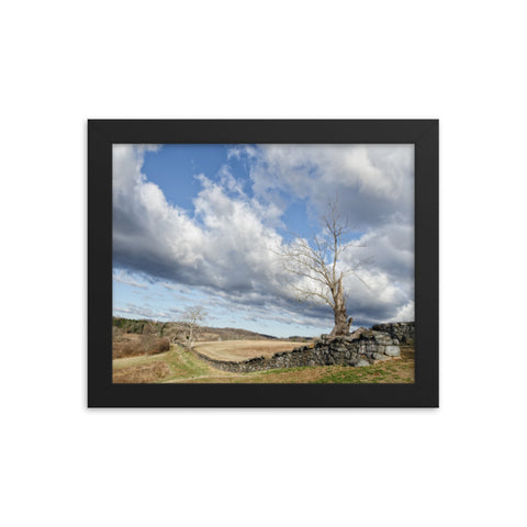 Dead Tree and Stone Wall - Color Framed Rural Landscape Photo Paper Wall Art Prints