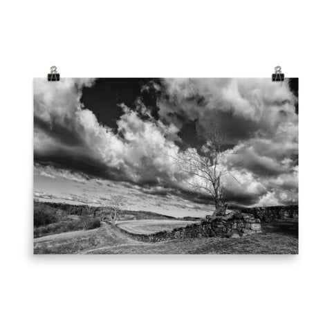 Dead Tree and Stone Wall Black and White Rural Landscape Photo Loose Wall Art Prints