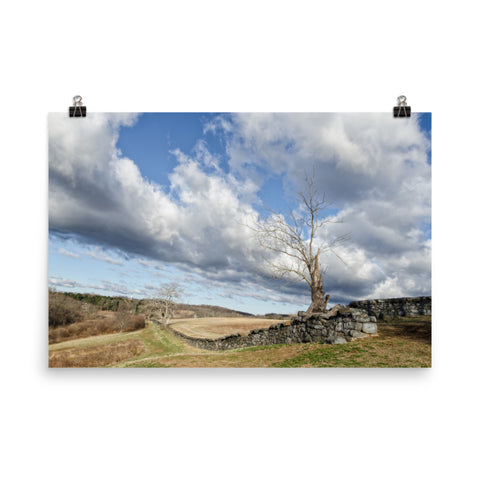 Dead Tree and Stone Wall Rural Landscape Photo Loose Wall Art Prints