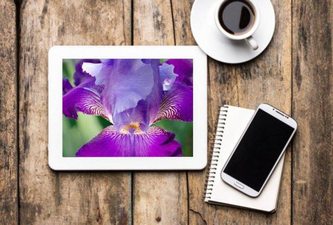 https://pipafineart.com/products/digital-desktop-laptop-tv-screensavers-mobile-backgrounds-and-for-digital-picture-frames-floral-nature-photograph-glowing-iris