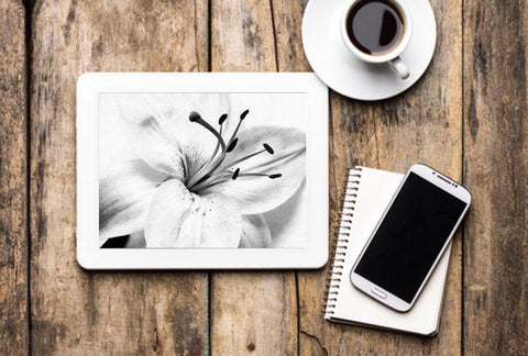 Digital Desktop Laptop TV Screensavers-Mobile Backgrounds and for Digital Picture Frames - Black and White Floral Nature Photo High-key Lily
