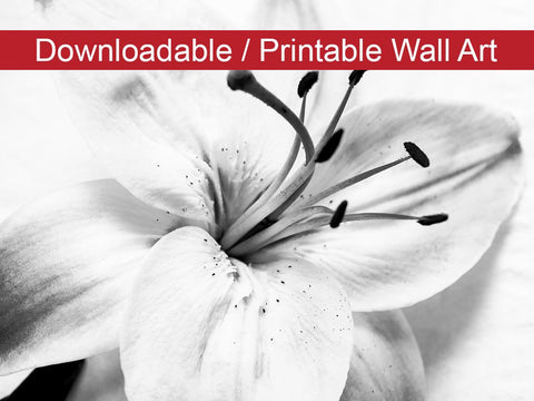 Digital Wall Art, Downloadable Prints, Black and White Floral Nature Photo High-key Lily - Wall Decor Instant Download Print - Printable