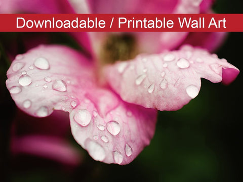 Digital Wall Art, Downloadable Prints, Floral Nature Photograph Raindrops on Wild Rose - Wall Decor Instant Download Print - Printable