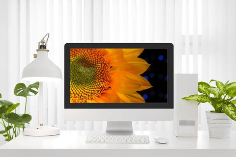 Digital Desktop Laptop TV Screensavers - Mobile Backgrounds and for Digital Picture Frames - Floral Nature Photograph Close-up Sunflower