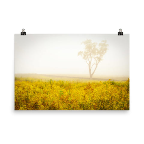 Dreams of Goldenrod and Fog Rural Landscape Photo Loose Wall Art Prints
