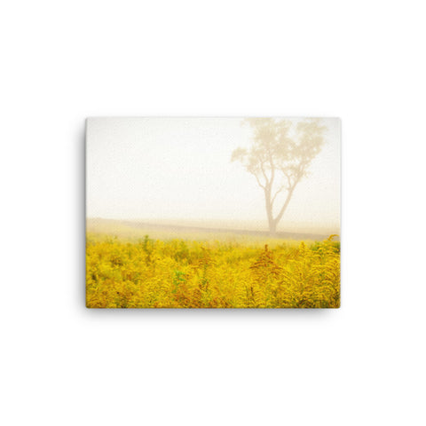 Dreams of Goldenrod and Fog Rural Landscape Canvas Wall Art Prints
