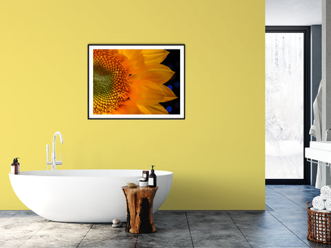 Floral Nature Photograph Close-up Sunflower - Fine Art Canvas Prints - Home Decor Unframed Wall Art Prints for your living room, bedrooms, dining rooms family rooms and more.